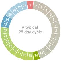 Regular cycle